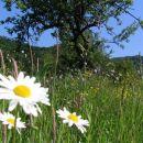 Travnik v svoji lepoti