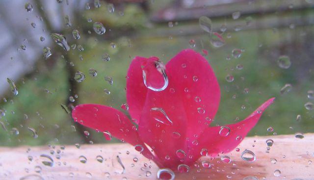 Cvetka na okenski polici
