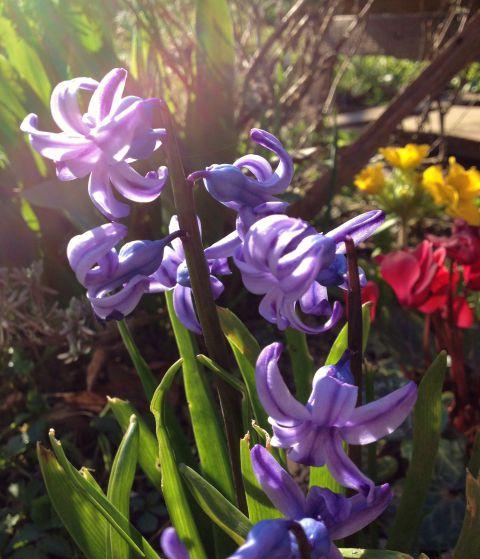 Delček letošnje pomladi doma