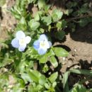 Modri cvetlici - Blue flowers