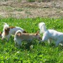 Billy, Lumpa, Mishko in Geri