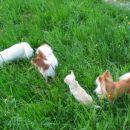 Geri, Gracie, sassy in Yaki na pohodu.