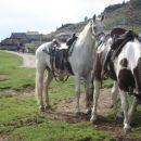 Tudi s konji so prišli na golaž