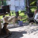 obisk vedno lačne prijateljice na taboru v Podpeci