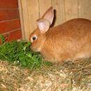 Bunny-kunec