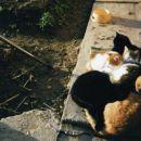 Muce počivajo na toplem, popoldanskem soncu.  To so: PLAVOOKEC, RDEČOOKEC,ŽUTKA,MICA IN Č