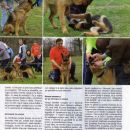 breeding german shepherds