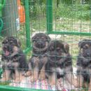 puppies at 2 mounth