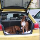 luksuzni prevoz živali...