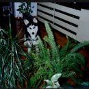 Lars 6-7 mesecev - pogled iz domače džungle