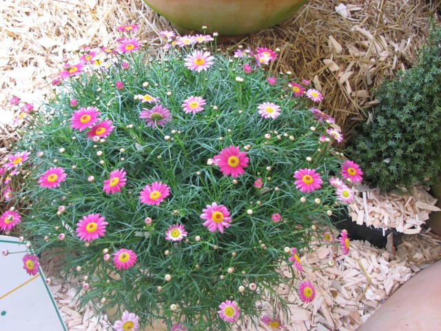 Cvetje - foto