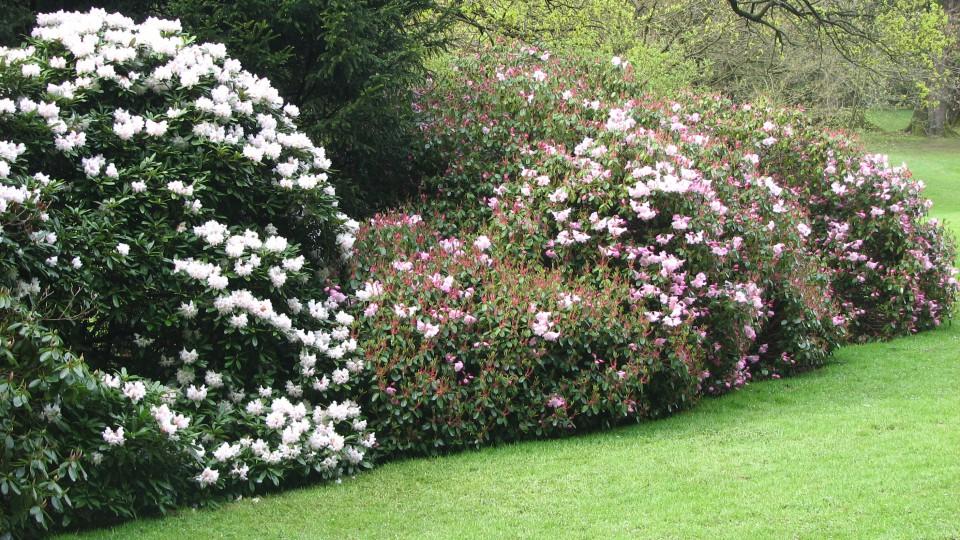 Cvetje - foto povečava