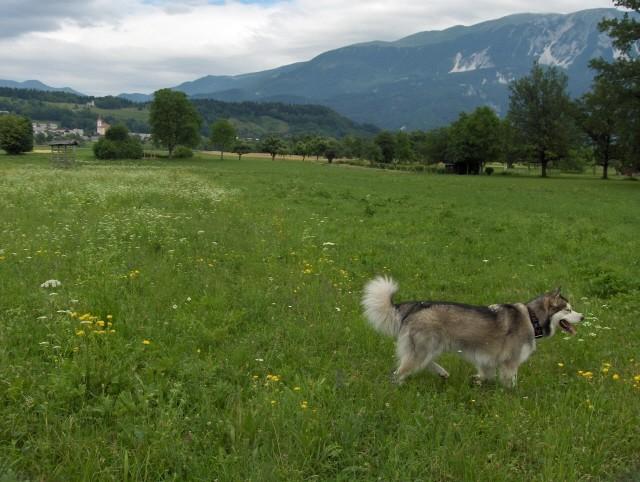 Aska - 1.-2.7.2006 - foto