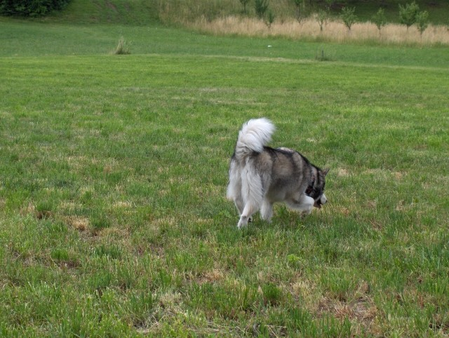 Aska - 1.-2.7.2006 - foto povečava