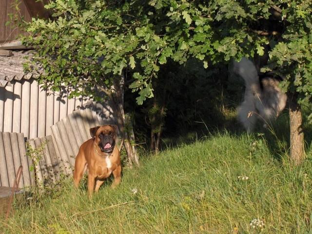Aska-julij 2006 - foto