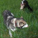 Zajčja dobrava - Aska in Baki - 23.4.2007