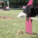 agility ilirija 9.7.2006