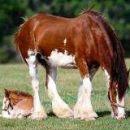 kobila in žrebiček
