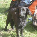 Vaja Enot reševalnih psov v Tržiču, maj 2005