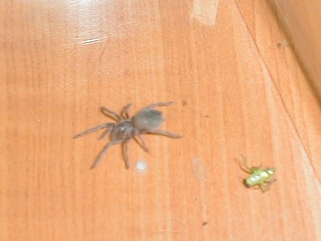 Scorpion 467 - foto povečava