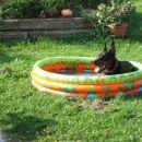 ko je res vroče je Nick zadovoljen tudi v majhnem bazenčku