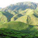 100 % Highlands tea from Malaysia