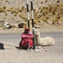Woman take rest with alpaca
