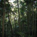 Inside the Tijuca Forest