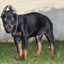 Monster Kampfhund