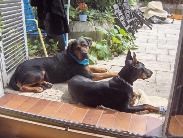 Murphy & Kiro  - foto