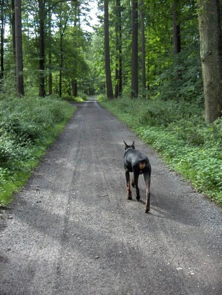 Black Forest - foto povečava