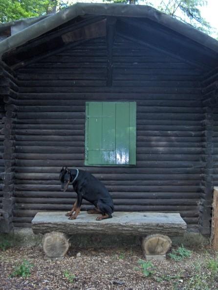 Black Forest - foto