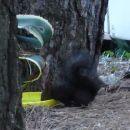 Tudi veverica gasi žejo