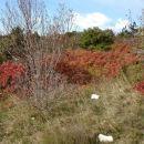 Jesen na krasu