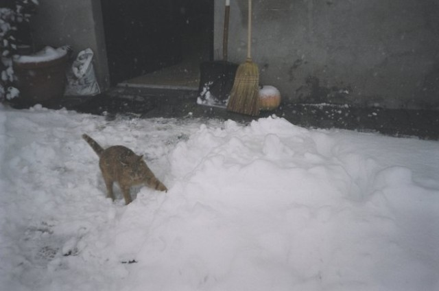 Tale mačkon je napadel sneg :P