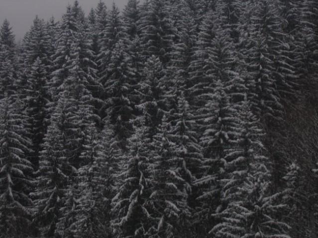 Zima 2005 - foto