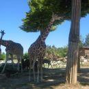 Pa spet žirafe