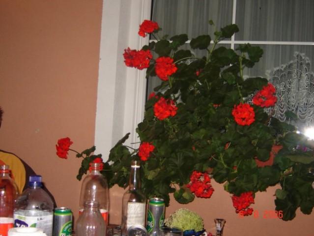 Home alone:) - foto