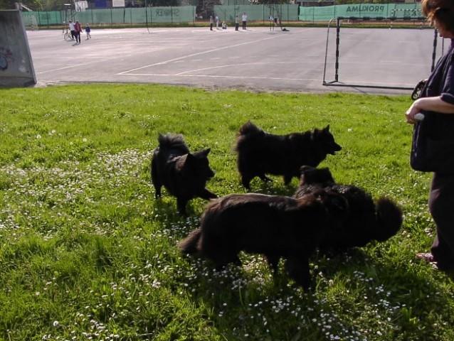 Nati, Calli, Nik in Ulli tečejo po priboljške