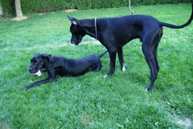 Nero in Princ - foto
