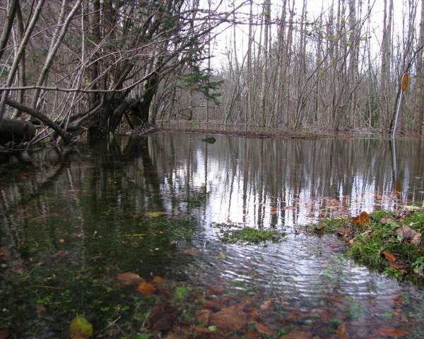 Bohinj_velika voda - foto