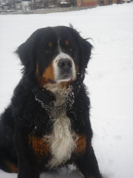 Zima (2005) - foto