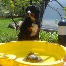 Lenny+prijateljice želve