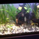 moj 240L akvarij
