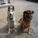 To sta dva izmed naših psov; Runo (desni) in Sky.