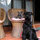 Vento in Tobi v senčki pred hišo