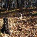 potepanje po gozdu