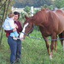 tale konj je pa velik