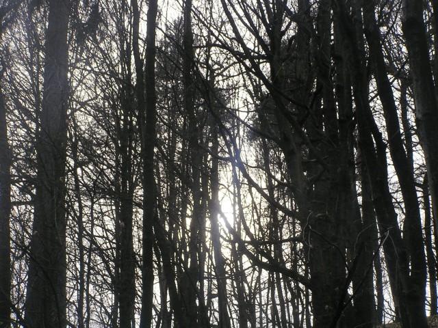 Slabotno sonce mežika med vejami