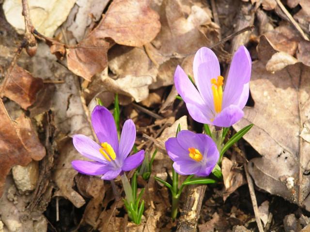Pomladni sprehodi - foto
